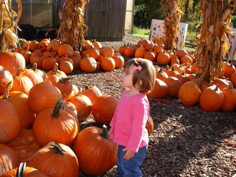 pumpkins, farm, halloween